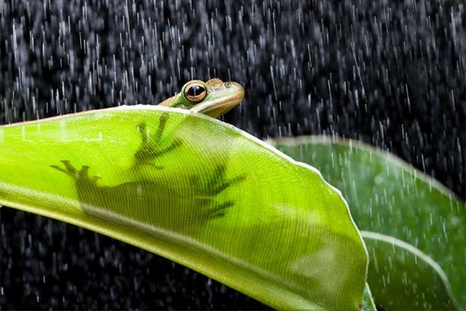 Weather And Land Prediction By Animal Behavior | The Alabama